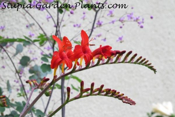Plantas que los colibríes aman | El examinador