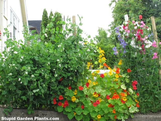 Easy Garden Plants