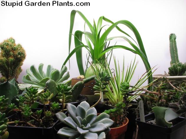 winter grow lights plants in the house stupid garden plants