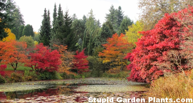 ... Dusen Gardens Website. Autumn ...