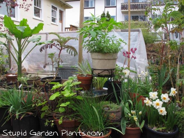 Stupid Garden Plants