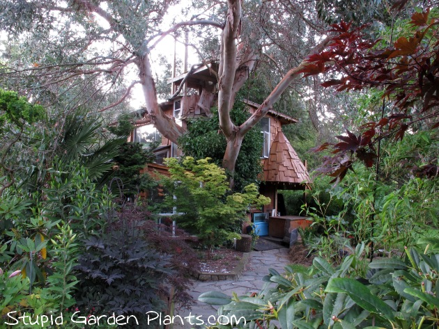 Planting Under Eucalyptus Trees : Sunday plant adventure eucalyptus tree house stupid garden plants