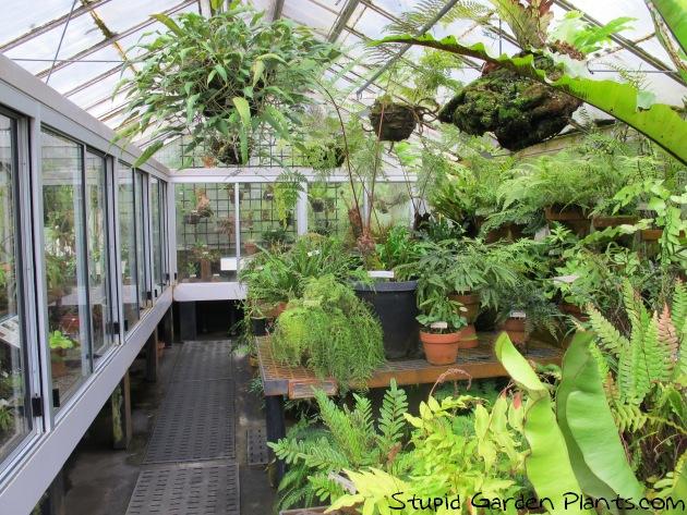 Plant Geek Abroad: UC Botanical Garden Berkeley   Stupid Garden Plants