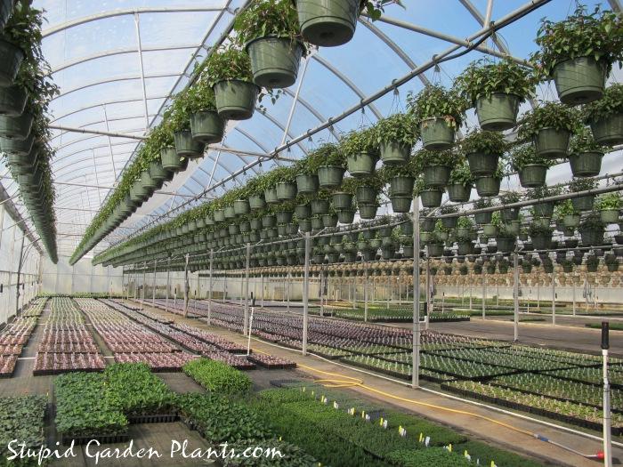 Greenhouse Life