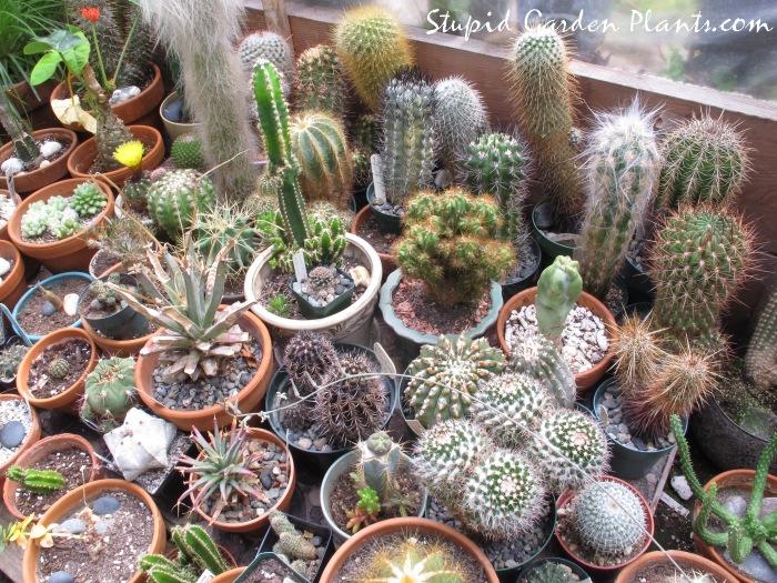 Cactus house