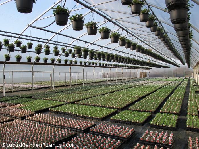 Sprawling Greenhouses