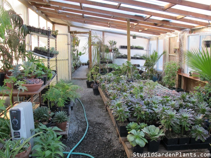 Our back greenhouse