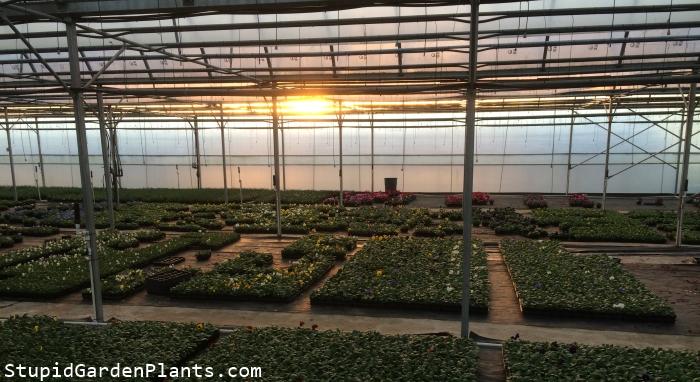 Sunset @ greenhouse