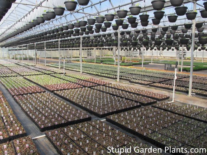 Greenhouse long shot