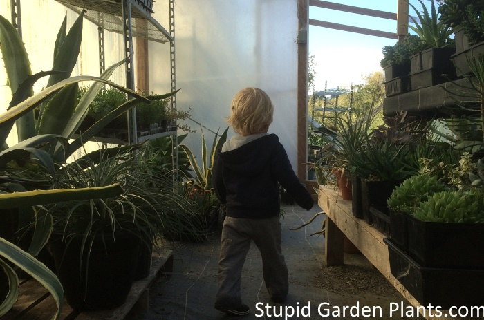 my son at the greenhouse