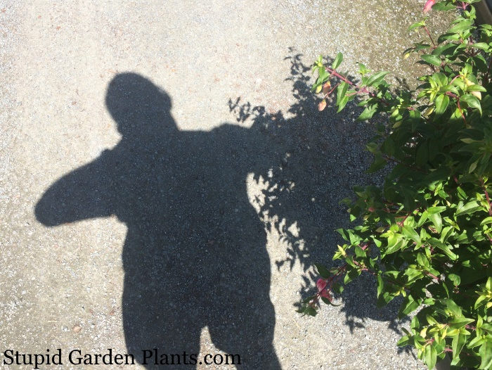 shadow of nurseryman